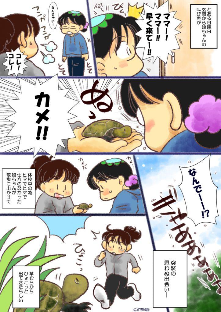 娘が草むらから出てきた亀を保護した漫画